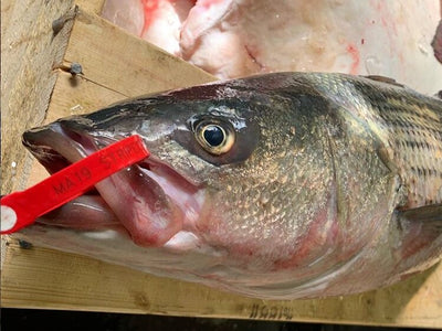 Ask a Fishmonger: Is Fish Seasonal?