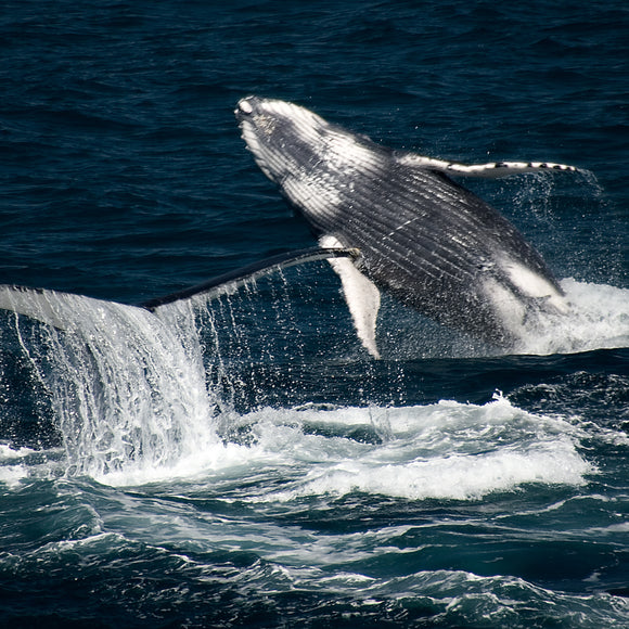 Whale Watch & Cruises