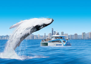 Sea World Cruises - Whales In Paradise - Sea World Whale Watch - 2pm / 3pm