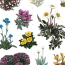 Alpine Flowering Plants Artist Print