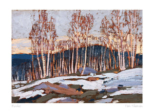 Birches by Tom Thompson Card