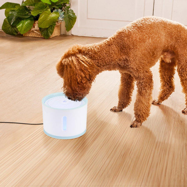 Automatic Pet Water Fountain with LED Light - Pawgood