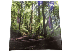 Load image into Gallery viewer, Forest Wall Hanging Canvas (006)