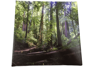 Forest Wall Hanging Canvas (006)