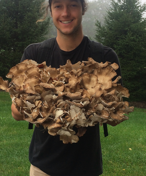 Meet Maitake: the Hen of the Woods