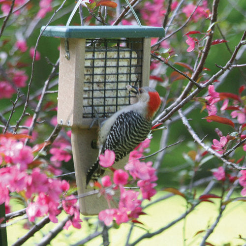 Recycled Single Tail Prop Suet Feeder