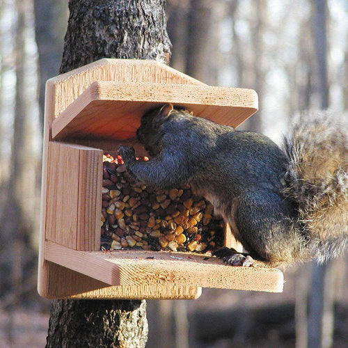 Squirrel Feeder Munch Box