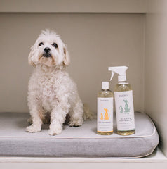 Puracy All Natural Pet Stain and Odor Remover