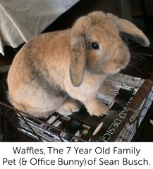 Waffles the 7 year old family pet (and Office Bunny) of Sean Busch