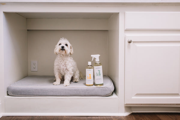 Puracy pet stain remover