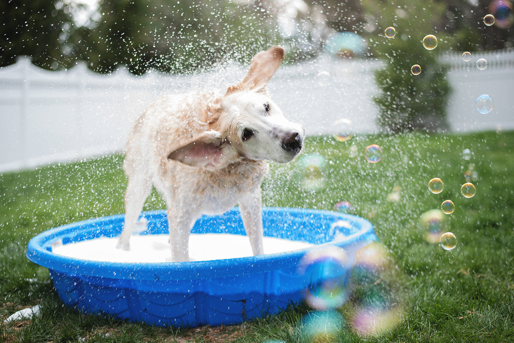 tips for bathing your pet