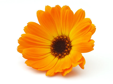 Organic Calendula Flower Powder