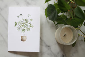 Umbrella Plant Card