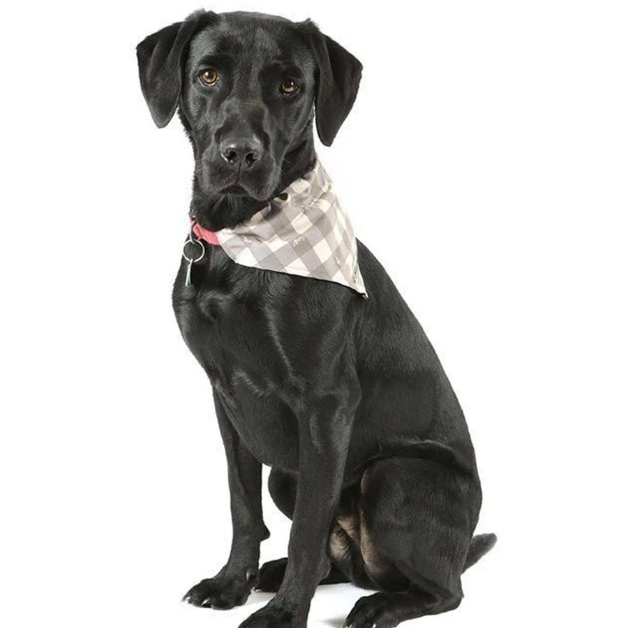 Scruffs - Insect Shield® Bandana's - comfypet