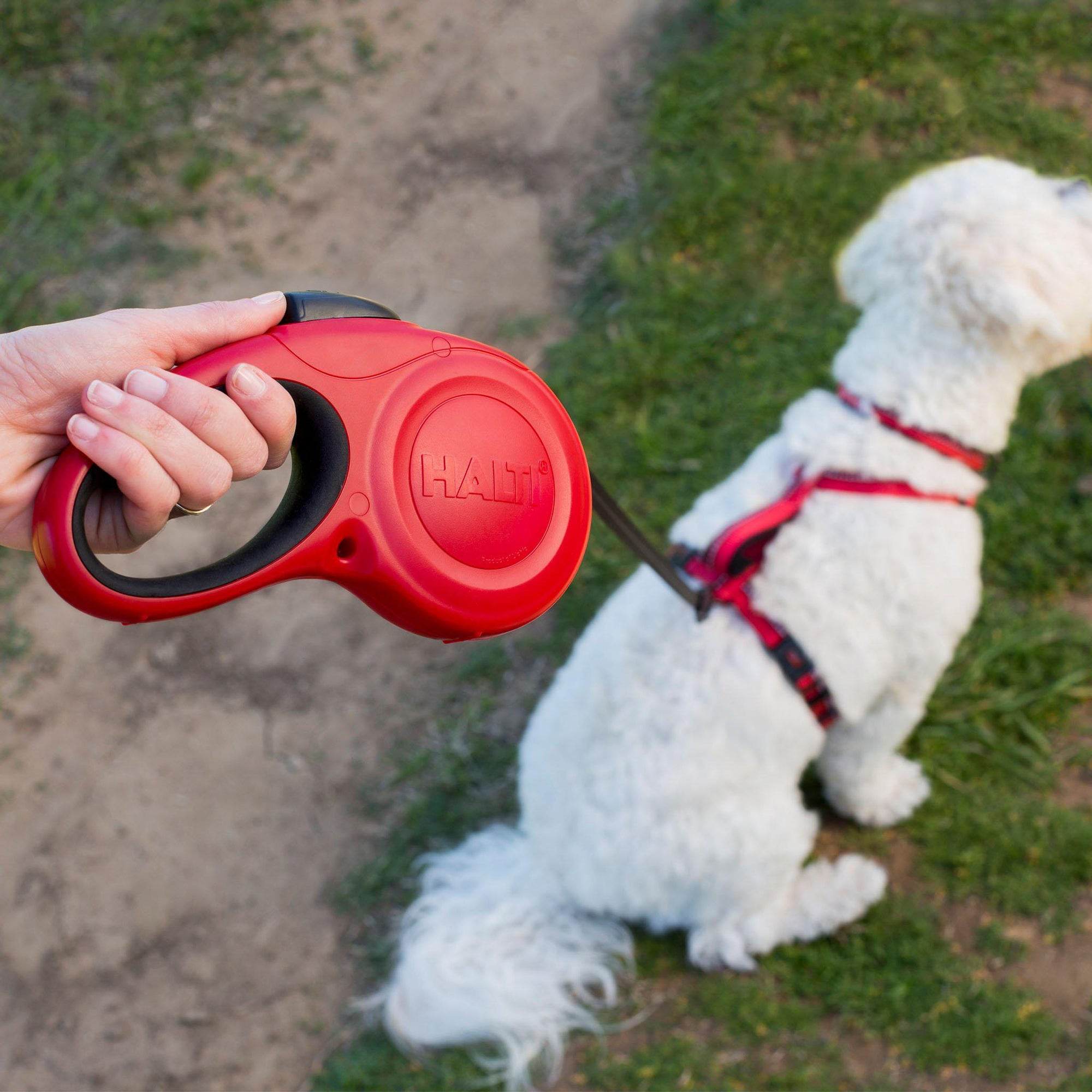 HALTI Retractable Lead - ComfyPet Products