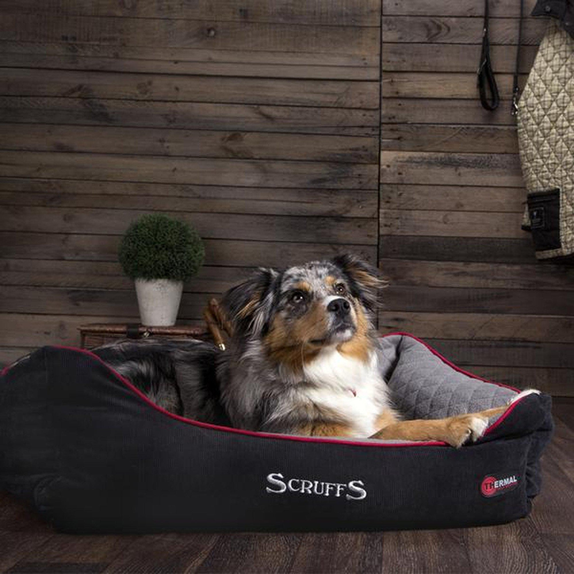 Scruffs Thermal Box Bed - ComfyPet Products