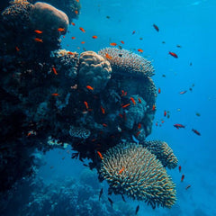 Environmentally friendly diving to conserve marine life for sustainable development