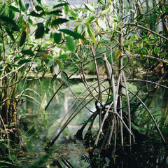 Mangrove aquaculture to be supported by state-of-the-art environmental monitoring