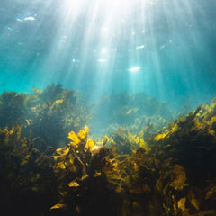 Seaweed: The food and fuel of the future?
