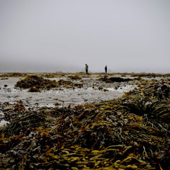 New Research to Explore Seaweed for Ocean, Economic Health