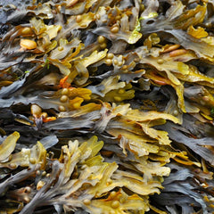 Methane-Busting Seaweed Farms on Track for 2021 Production