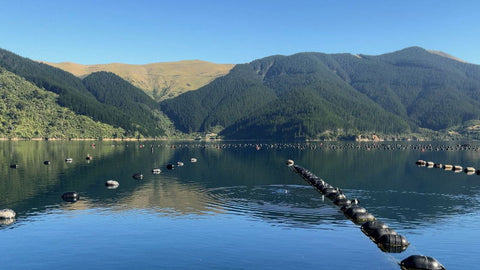 NZ Firm Developing New Mussel Float Design for Exposed Waters