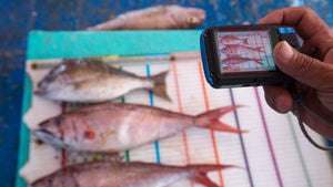 FishFace: Using game-changing technology to protect global fish stocks
