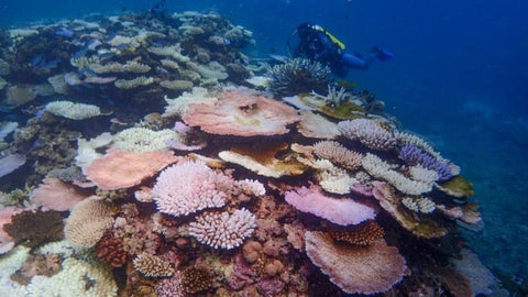 Heat resistant coral to fight bleaching