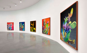 The contemporary exhibition showing the large format oil on canvas paintings of cactus fantastically colorful cactus plants made by emerging contemporary artist Dominic Virtosu.