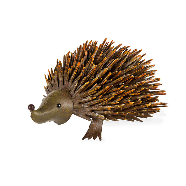 Rusty Round Nose Hedgehog