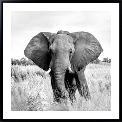 Anderson Elephant Canvas