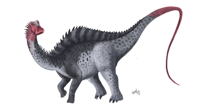<i>Rebbachisaurus</i>, Moroccan sauropod with tall spines!