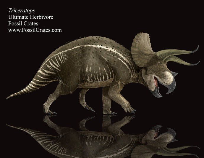 Ultimate Herbivores: Triceratops!  Fun Facts about our Frilly Friend