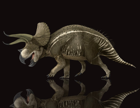 Triceratops Fossil Crates