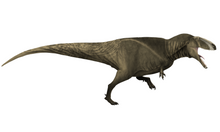 Load image into Gallery viewer, <i>Carcharodontosaurus</i> tooth and artwork