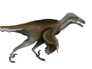 Digital painting of feathered Dromaeosaurus in side view
