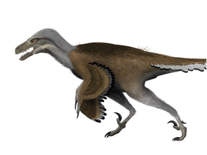 Digital painting of a feathered Dromaeosaurus running