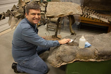 Load image into Gallery viewer, Paleontologist Dr. Brian Curtice photograph wiping down dinosaur bones cleaning