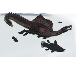 Colored drawing of a swimming Spinosaurus next to a coelacanth fish in a Cretaceous river
