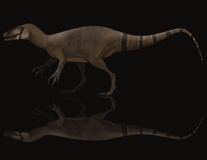 <i>Megaraptor</i> has a new cousin!  New, unnamed megaraptorid exclusive!