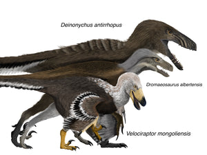 Digital painting of feathered Deinonychus, Dromaeosaurus, and Velociraptor Cretaceous theropod raptor dinosaurs