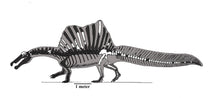 Load image into Gallery viewer, Drawing of Spinosaurus skeleton with a scale bar in side view