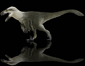 "***Ships 12/2*** <i>Utahraptor</i> ""killing claw""!  Deadliest toe claw ever discovered!"