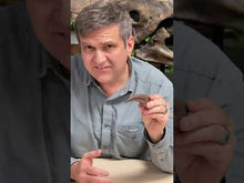 Load and play video in Gallery viewer, Video of paleontologist Dr. Brian Curtice discussing a Tyrannosaurus rex hand claw