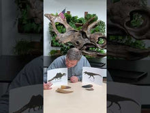 Load and play video in Gallery viewer, Video of paleontologist Dr. Brian Curtice discussing Tyrannosaurus versus Spinosaurus
