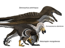 Load image into Gallery viewer, Crate - Raptors!  <i>Velociraptor</i>, <i>Deinonychus</i>, and <i>Dromaeosaurus</i>