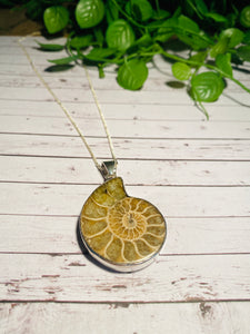 Fossil Ammonite pendant set in sterling silver