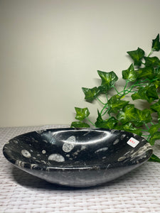 Large Fossil Orthoceras bowl - home decor