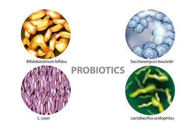 Gut bacteria - what's on the menu? Part 2 - Probiotics
