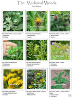 Medicinal Weeds Herbs Reference Manual